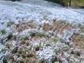 可児市の花フェスタ記念公園の青いお花畑動画